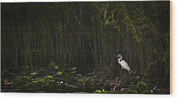 Heron In Grass Wood Print