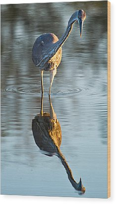 Heron Looking At Its Own Reflection Wood Print by Andres Leon
