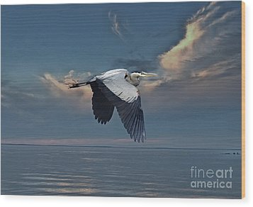 Heron Night Flight  Wood Print