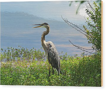 Heron On Lake Wood Print