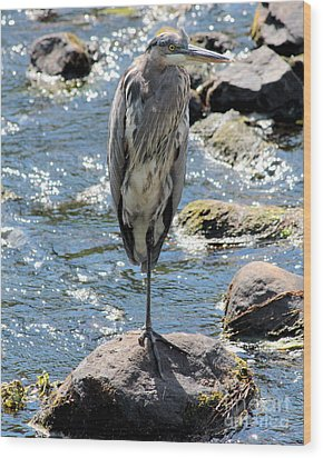 Wood Print featuring the photograph Heron On One Leg by Kenny Glotfelty
