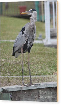 Wood Print featuring the photograph Heron On The Edge by Debbie Hart