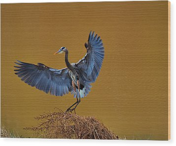 Heron With Wings Out - 9235 Wood Print by Paul Lyndon Phillips