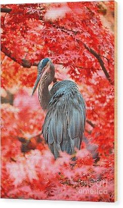 Heron Wonderland Wood Print by Douglas Barnard