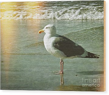 Herring Gull Watching Wood Print