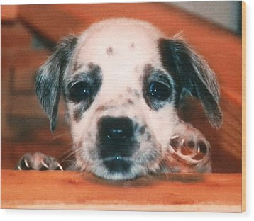 Dalmatian Sweetpuppy Wood Print by Belinda Lee