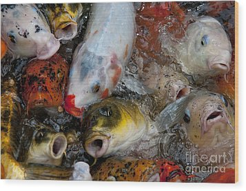 Hey Whats Happening Wood Print by Wilma  Birdwell