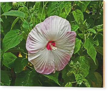 Hibiscus Wood Print by Aimee L Maher Photography and Art Visit ALMGallerydotcom