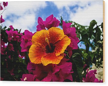 Hibiscus Beauty Wood Print by Randy Sylvia
