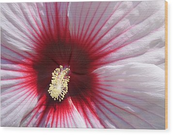 Hibiscus-callaway Gardens Wood Print by Mountains to the Sea Photo