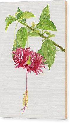 Hibiscus Chinese Red Lantern Wood Print by Sharon Freeman