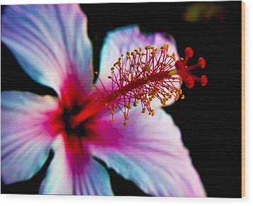 Wood Print featuring the photograph Hibiscus Extending by Joseph Hollingsworth