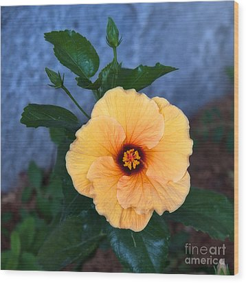 Hibiscus In Fading Light Wood Print by Vinnie Oakes