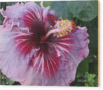 Wood Print featuring the photograph Hibiscus In Hawaii by Laura  Wong-Rose