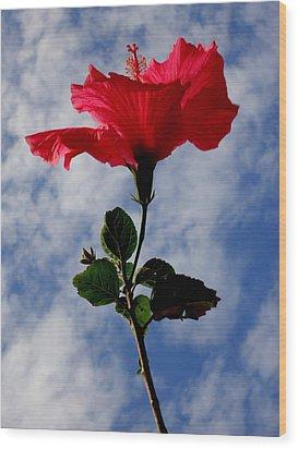 Hibiscus In The Sky Wood Print