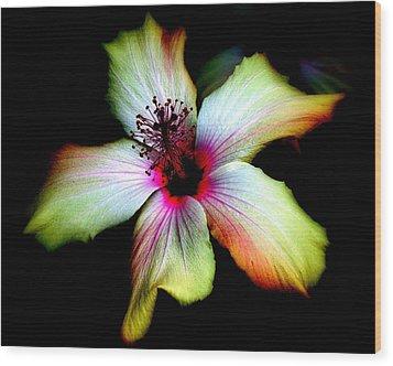 Hibiscus Wood Print by Jodie Marie Anne Richardson Traugott          aka jm-ART