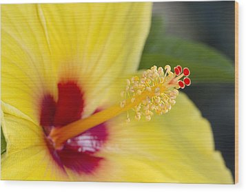 Wood Print featuring the photograph Hibiscus Macro by Robert Camp