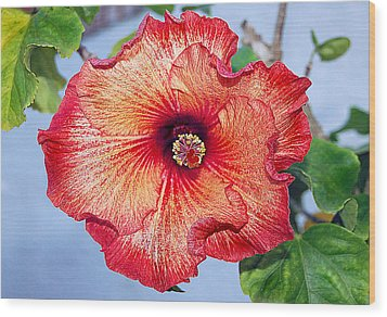 Hibiscus - Mahogany Star Flower Wood Print by Donna Proctor