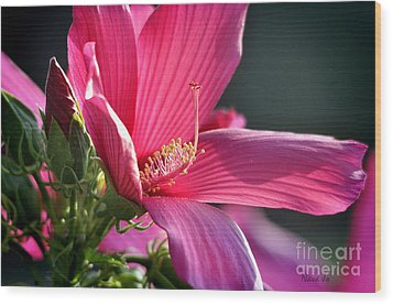 Wood Print featuring the photograph Hibiscus Morning Bright by Nava Thompson