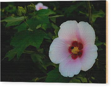 Hibiscus Mutabilis Flower Wood Print by Donald Chen