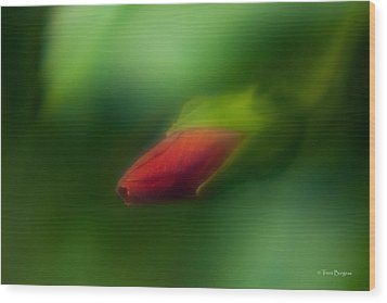 Wood Print featuring the photograph Hibiscus Softly 1 by Travis Burgess
