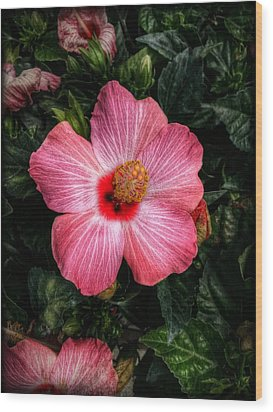Hibiscus Sunset Wood Print