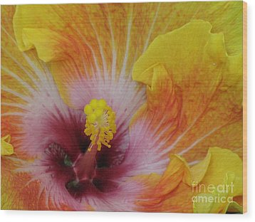 Wood Print featuring the photograph Hibiscus by Tam Ryan