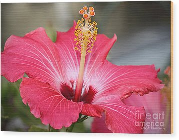 Hibiscus Wood Print by Todd A Blanchard