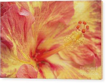 Hibiscus Wood Print by Tony Cordoza