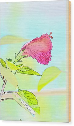 Hibiscus Unbloomed Wood Print by Cathy Shiflett
