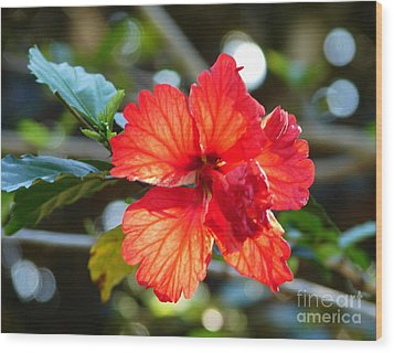 Hibiscus Veins Wood Print