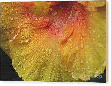 Wood Print featuring the photograph Hibiscus Water Drops by Lisa L Silva