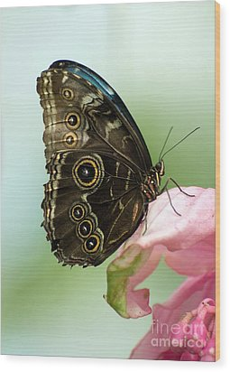 Wood Print featuring the photograph Hidden Beauty Of The Butterfly by Debbie Green