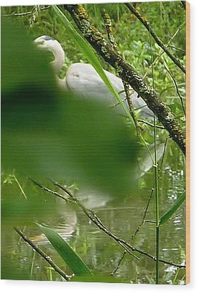Hidden Bird White Wood Print by Susan Garren