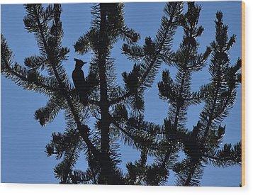 Hidden Bluejay In Silhouette Wood Print by Rich Rauenzahn