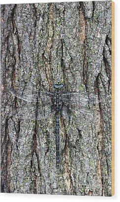 Hidden Dragon Wood Print