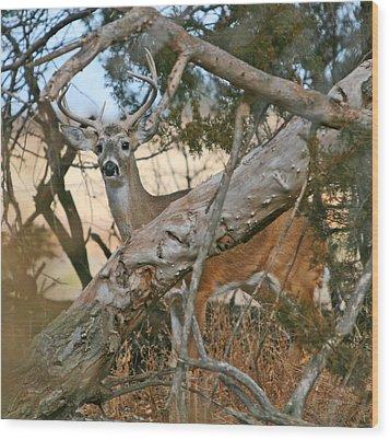 Wood Print featuring the photograph Hidden Prey by Shirley Heier