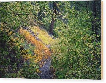 Hidden Trail Wood Print by Michele Richter