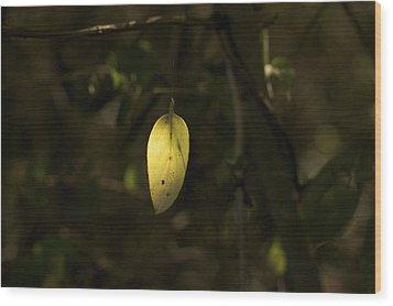Wood Print featuring the photograph Hidden Treasure - Yellow Leaf Art Print by Jane Eleanor Nicholas