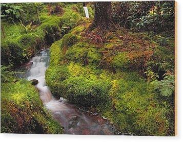 Hidden Woodland Corner. Benmore Botanical Garden. Scotland Wood Print by Jenny Rainbow