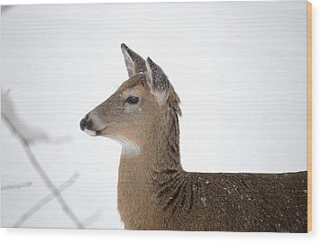 Wood Print featuring the photograph High Alert by Dacia Doroff