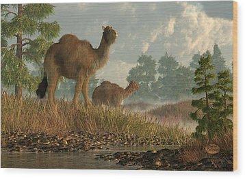 High Arctic Camel Wood Print by Daniel Eskridge