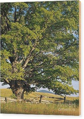 High Summer Wood Print by Alan L Graham