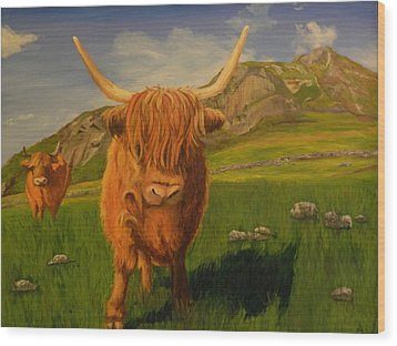 Highland Coos Wood Print by Kelly Bossidy