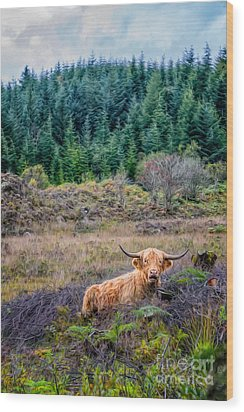 Highland Cow Wood Print by Adrian Evans