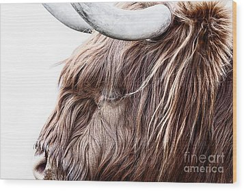 Highland Cow Color Wood Print by John Farnan