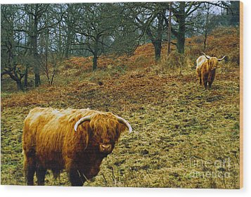 Wood Print featuring the photograph Highland Cows Landscape by Cassandra Buckley