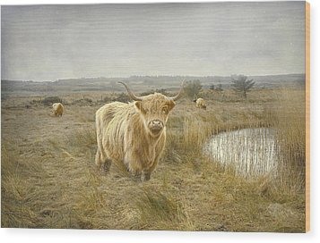 Wood Print featuring the photograph Highland Moo's by Roy  McPeak
