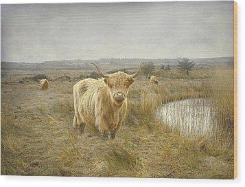 Highland Moo's Wood Print by Roy  McPeak