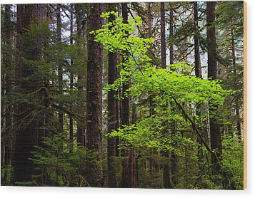 Highlight Wood Print by Chad Dutson